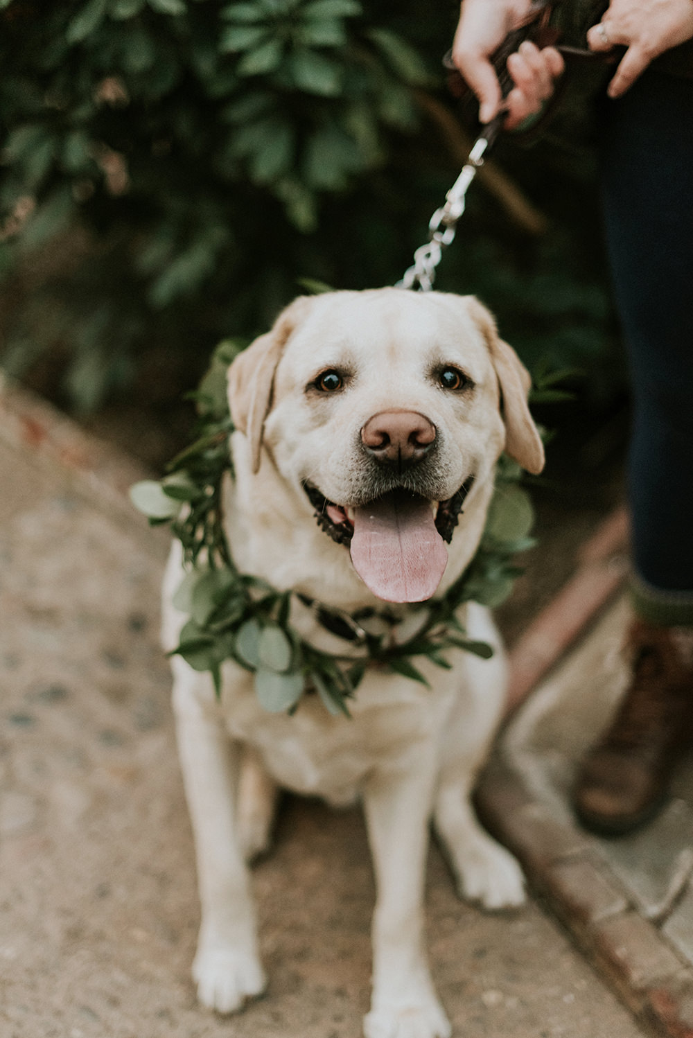 pets at weddings - photo by M2 Photography https://ruffledblog.com/black-tie-philadelphia-wedding-with-a-boho-twist