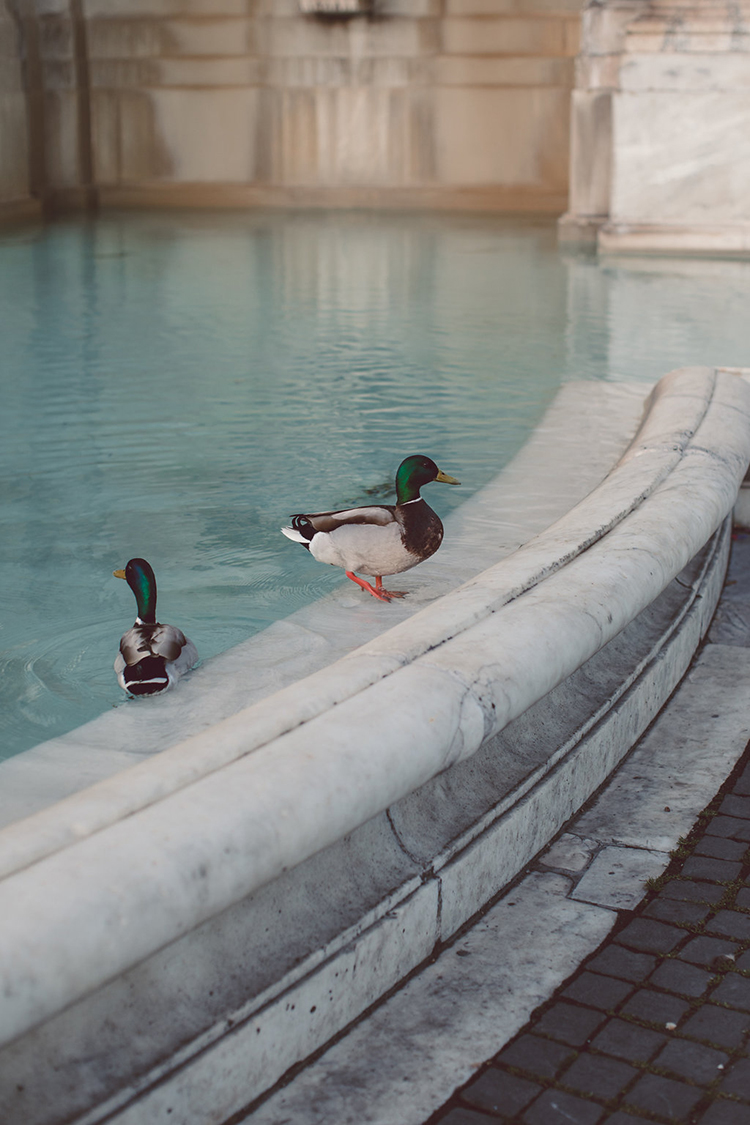 ducks in Roman fountains - photo by Lilly Red Creative http://ruffledblog.com/bridal-portraits-during-a-roman-sunrise