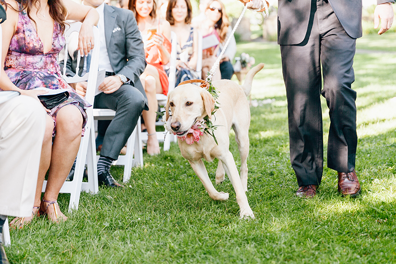 pets at weddings - photo by Emily Wren Photography https://ruffledblog.com/bright-beautiful-summer-wedding-with-geometric-accents