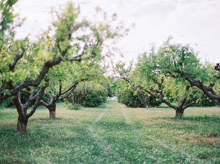 citrus orchard weddings - photo by Melissa Jill Photography https://ruffledblog.com/citrus-and-copper-orchard-wedding-inspiration