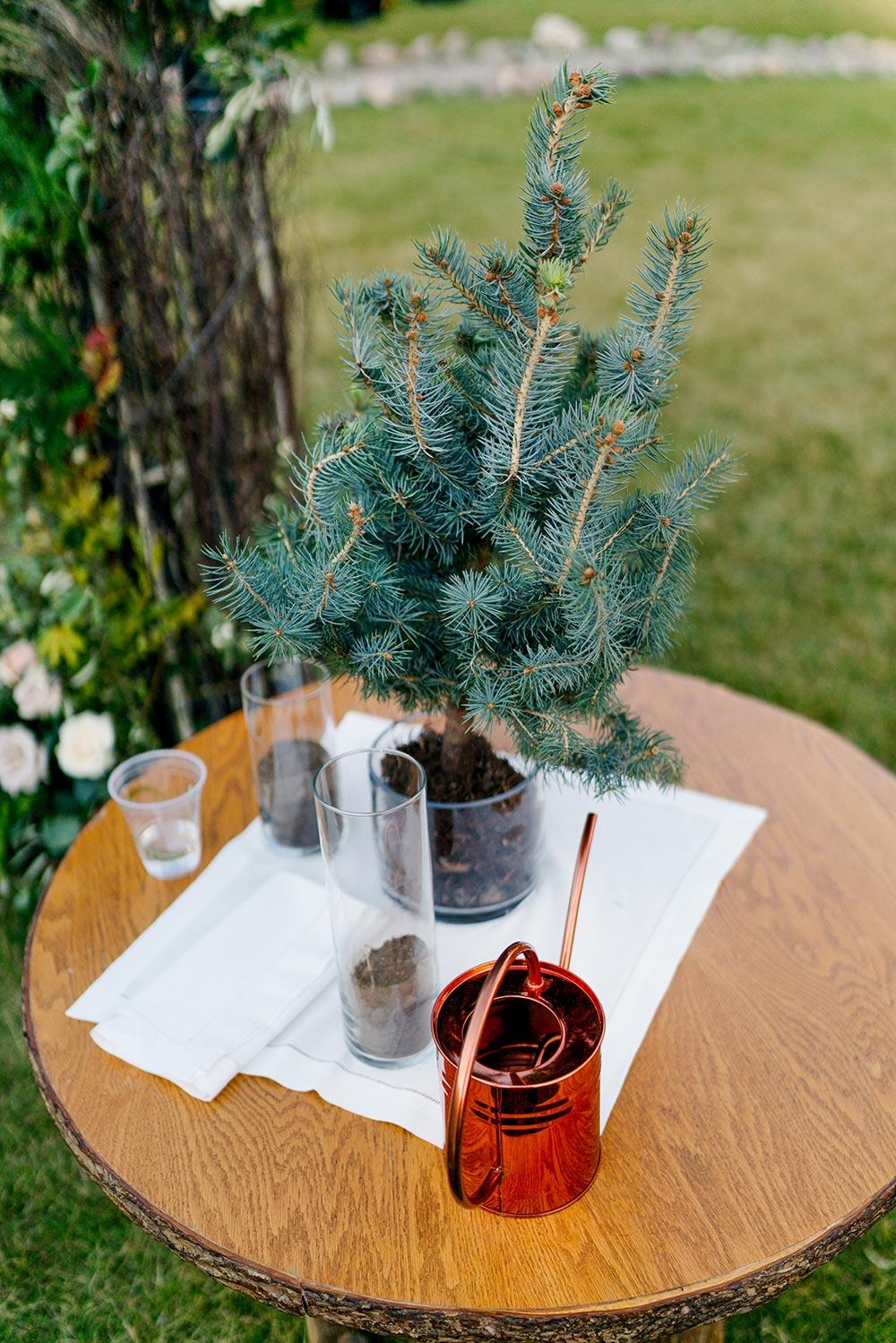 spruce tree unity ceremony wedding