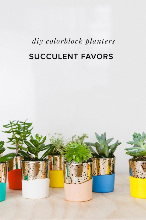 DIY Colorblock Succulent Favors