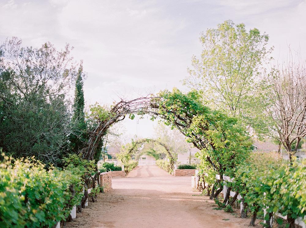 vineyard weddings - photo by Melissa Jill http://ruffledblog.com/fruit-filled-vineyard-wedding-inspiration