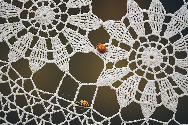ladybugs at weddings - photo by Ed and Aileen Photography https://ruffledblog.com/handcrafted-wedding-with-a-doily-hoop-ceremony-backdrop