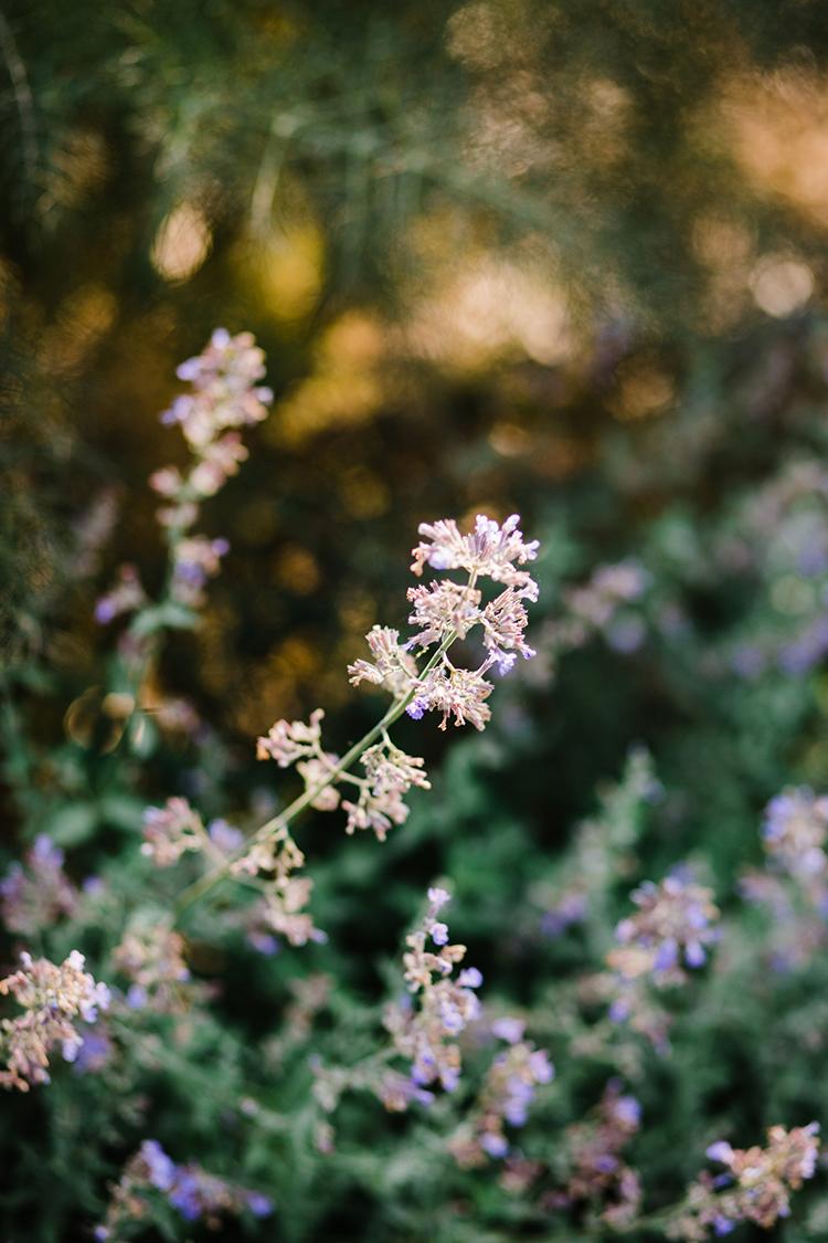 romantic wedding flowers - photo by Amilia Photography https://ruffledblog.com/heart-touching-north-carolina-nursery-wedding