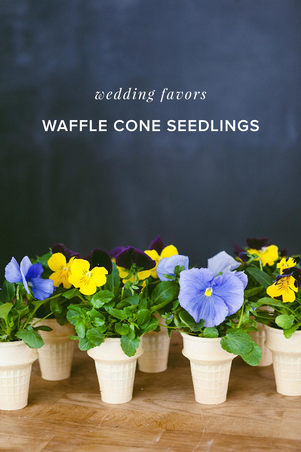 Ice cream Cone Seedlings