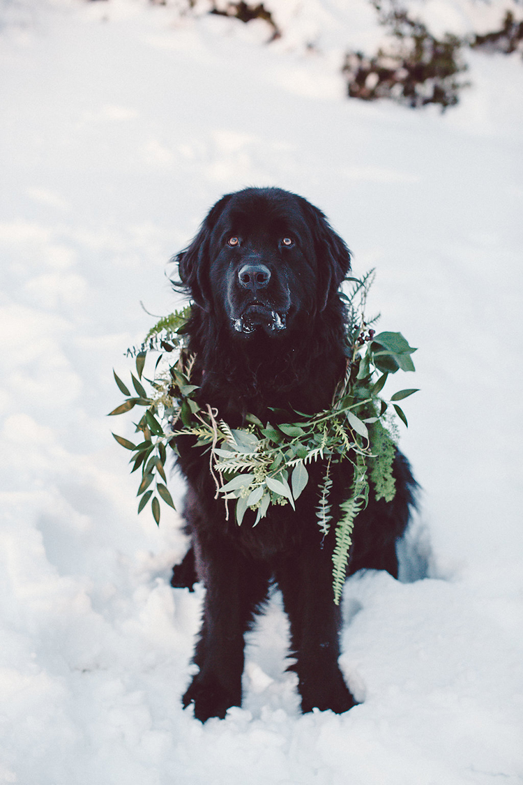 pets at weddings - photo by Lilly Red Creative https://ruffledblog.com/lake-tahoe-beach-wedding-inspiration