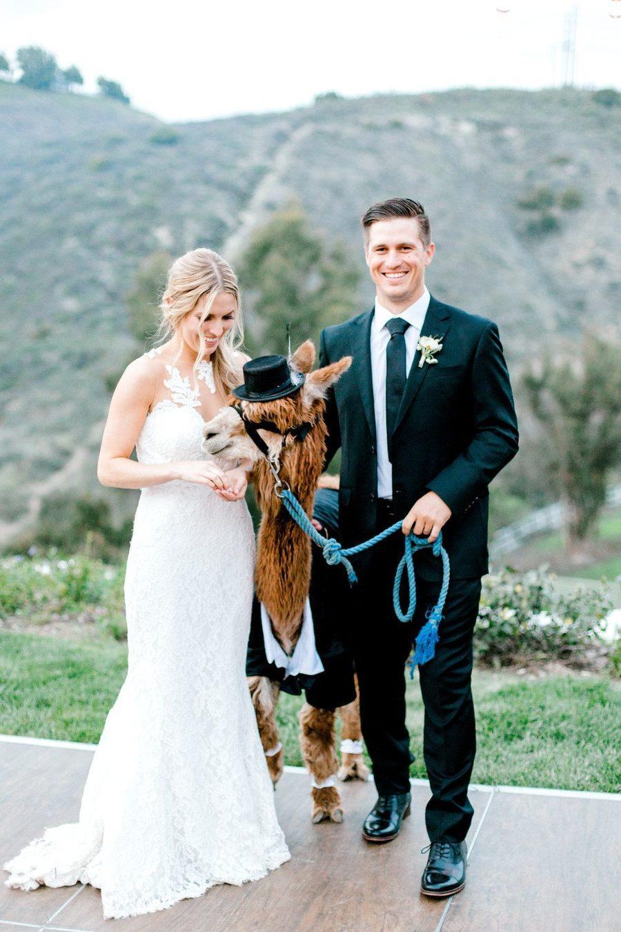 Lovable Backyard Wedding Alpacas 01