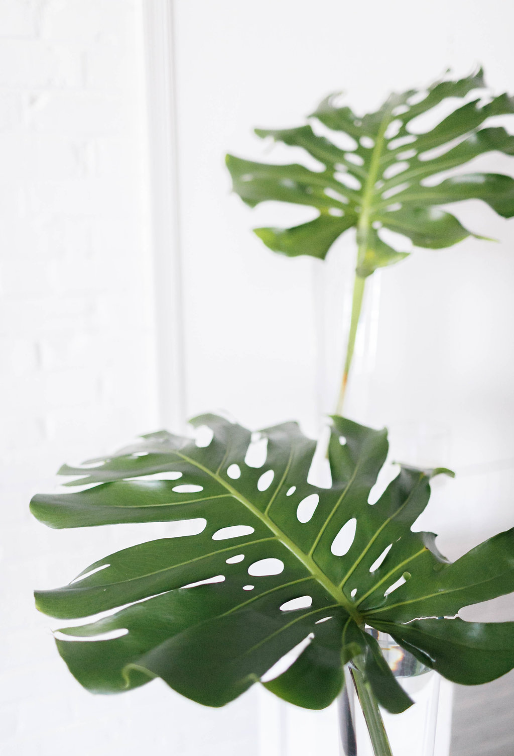 philodendron wedding ideas - photo by Virginia Ashley Photography http://ruffledblog.com/modern-industrial-wedding-inspiration-with-tropical-vibes