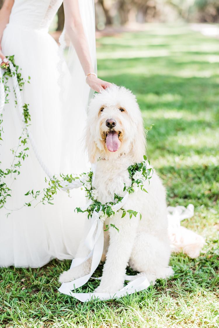 cute pets at weddings - https://ruffledblog.com/swoon-worthy-charleston-wedding-with-spanish-moss