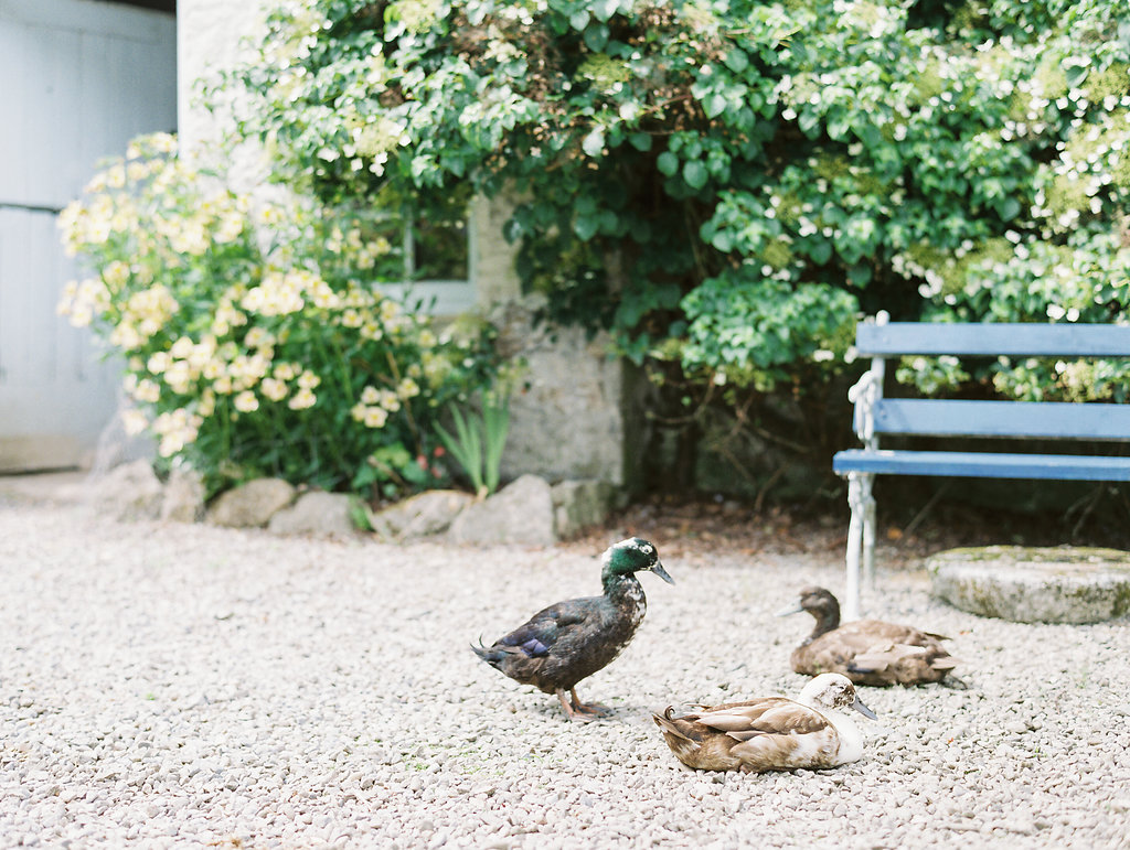 animals at weddings - photo by As Ever Photography https://ruffledblog.com/the-secret-garden-inspired-wedding-in-ireland